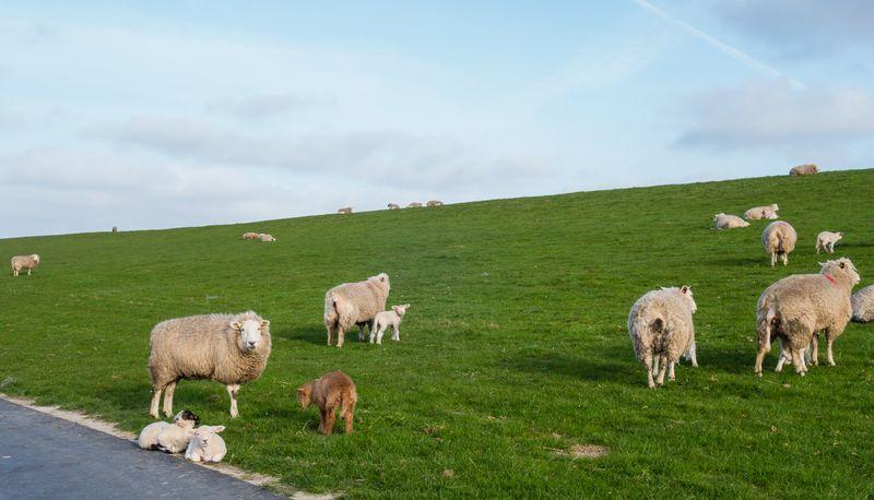 An der Nordseeküste: Urlaub in der schönsten Umgebung Dänemarks